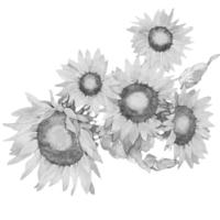 GraphicsByLiz_SunflowerGlory2006
