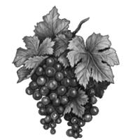 GraphicsByLiz_blackgrapes01