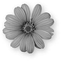 GraphicsByLiz_daisy01