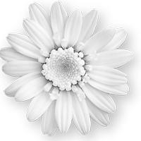 GraphicsByLiz_daisy02