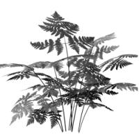 GraphicsByLiz_fern01