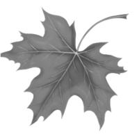 GraphicsByLiz_leaf01