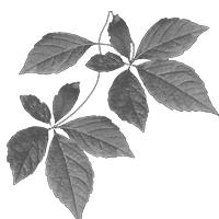 GraphicsByLiz_leaves01