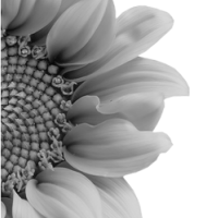 GraphicsByLiz_sunflower002_May2008