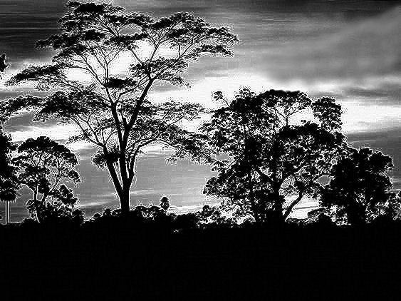 GraphicsByLiz_Serengeti_Feb2008
