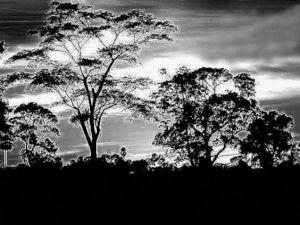 GraphicsByLiz_Serengeti_Feb2008_thumbnail